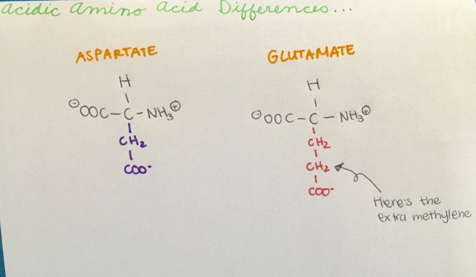 Amino Acid Differences